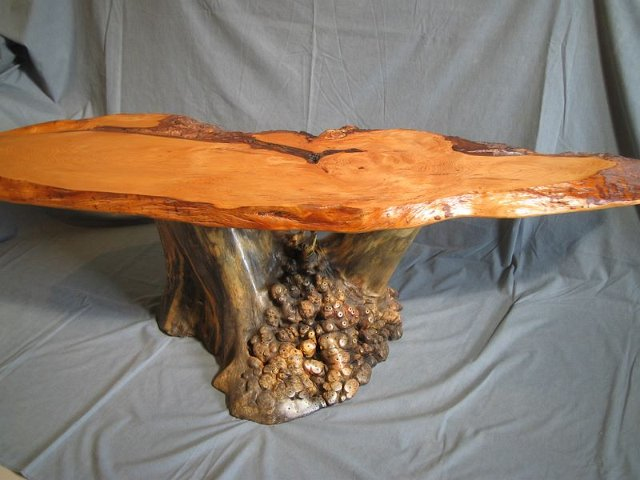 camphor_coffee_table_with_buckeye_root_burl_base.jpg